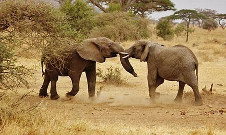elephant-babies_460x275